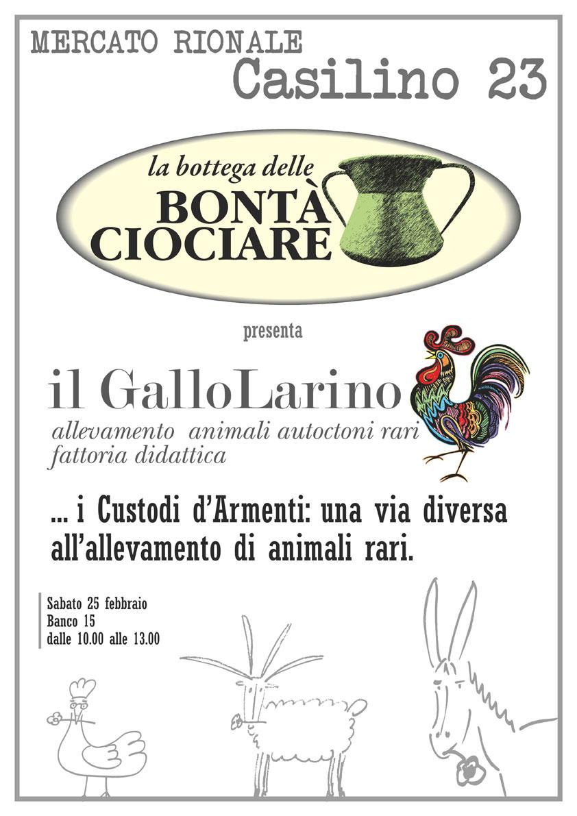 Gallo Larino